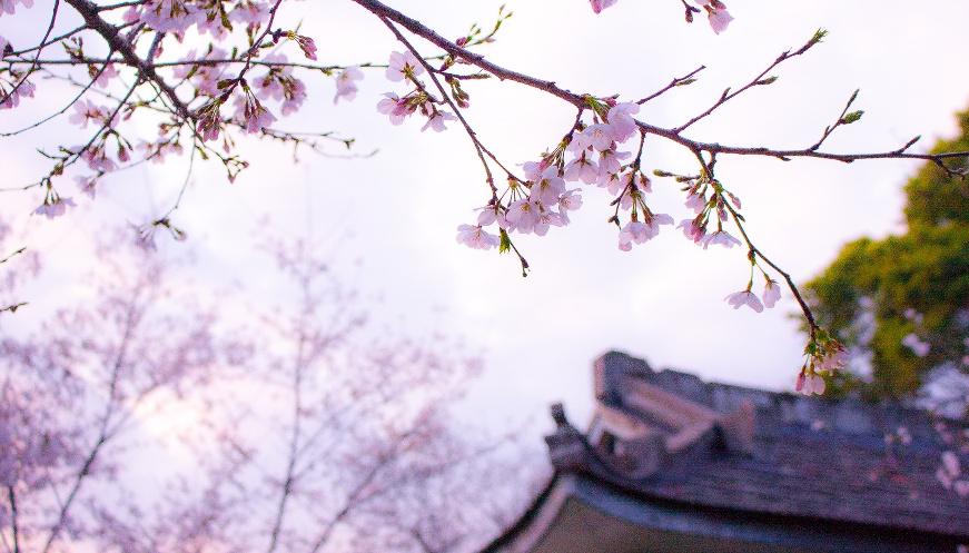 6 bonnes raisons de partir en lune de miel au Japon